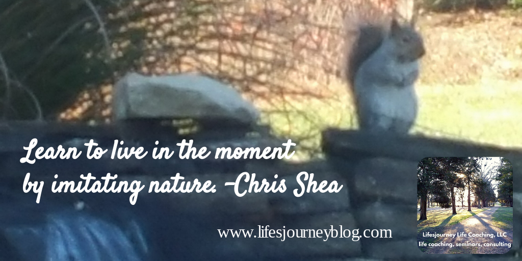 squirrel, life, mindfulness, meditation, zen, peace, inspirational, lifesjourney, Chris Shea, nature, pond, water